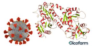 lattoferrina COVID 19
